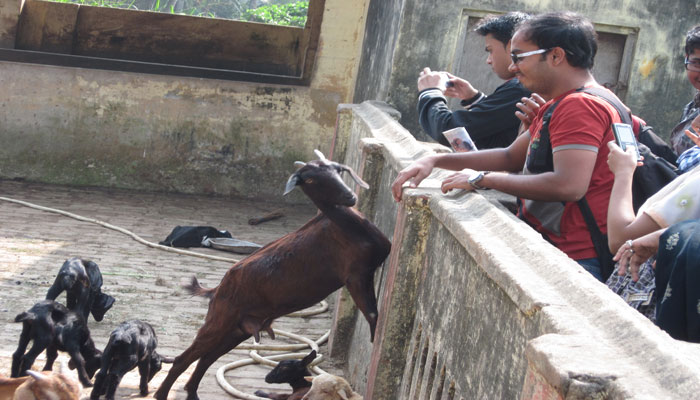 Students at Narendrapur Ramkrishna Mission Animal Husbandry Unit