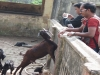 Students at Narendrapur Ramkrishna Mission Animal Husbandry Unit